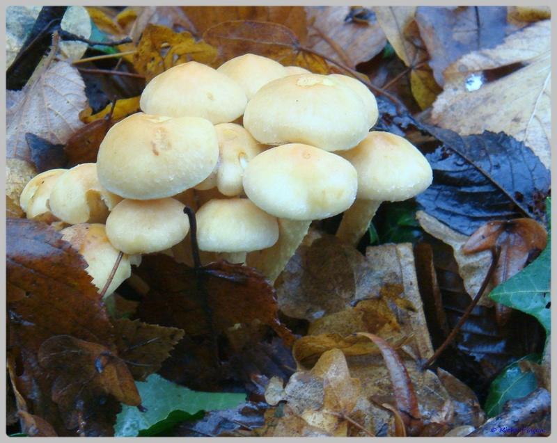 [fil ouvert] les champignons - Page 5 Dsc02128