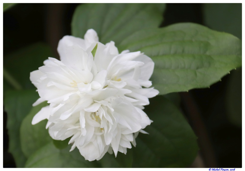 [Fil Ouvert] Fleurs - Page 22 Dsc02137
