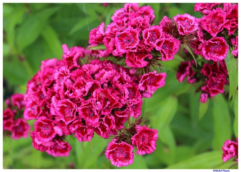 [Fil Ouvert] Fleurs - Page 22 Dsc02139