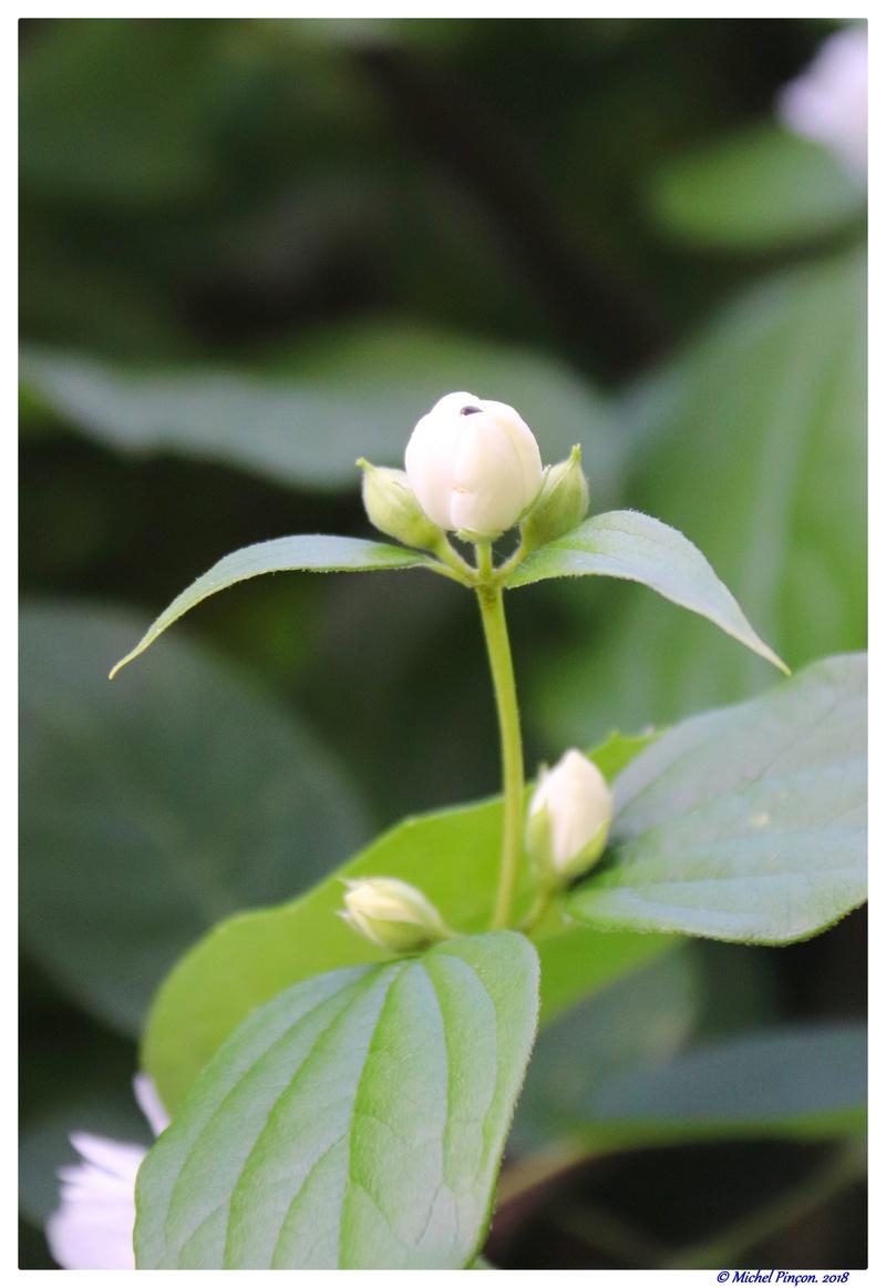 [Fil Ouvert] Fleurs - Page 22 Dsc02140