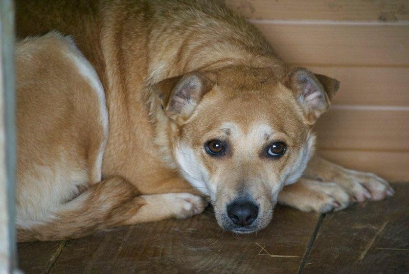 MAIKA - chienne croisée de taille moyenne, née 2015 - (Pascani) REMEMBER ME LAND Maika110