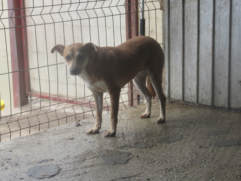 MAIKA - chienne croisée de taille moyenne, née 2015 - (Pascani) REMEMBER ME LAND Mayka_10