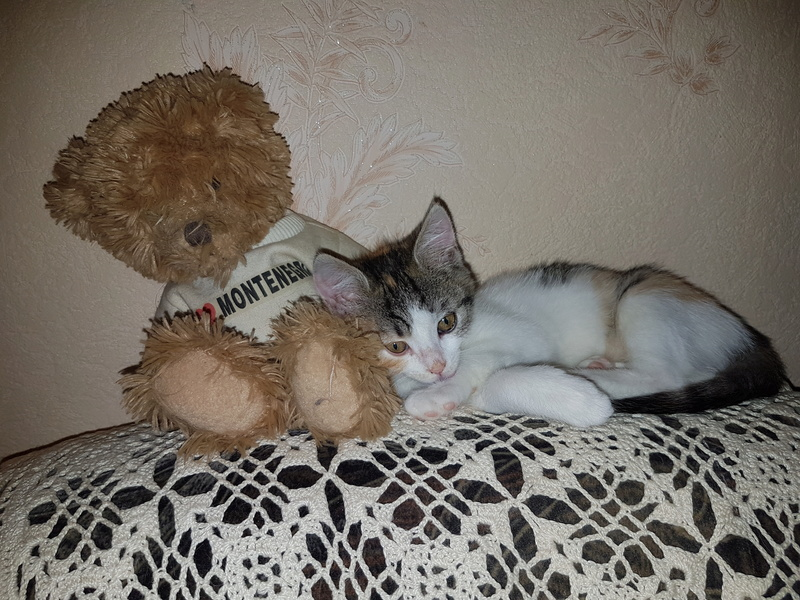 CALICE (ex KAÏNA) - chat femelle, née en fin juillet 2017 - En FA chez Abysse (depart92) - ADOPTEE PAR LAURE (95) 20171117