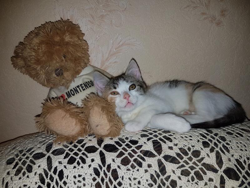CALICE (ex KAÏNA) - chat femelle, née en fin juillet 2017 - En FA chez Abysse (depart92) - ADOPTEE PAR LAURE (95) 20171118