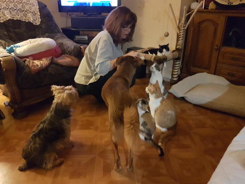 CALICE (ex KAÏNA) - chat femelle, née en fin juillet 2017 - En FA chez Abysse (depart92) - ADOPTEE PAR LAURE (95) 20171227
