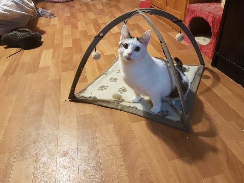 VODKA (ex KIARA) - chat femelle handicapée, née environ en 2015 - chez Lucian - Réservée FA par Abysse - ADOPTEE PAR VALERIE (92) 20180114