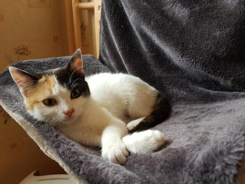 BICKY (ex NASKA) - chaton femelle, née environ novembre 2017 - adoptée par Lorène et Julien (75) 20180319