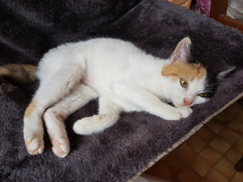 BICKY (ex NASKA) - chaton femelle, née environ novembre 2017 - adoptée par Lorène et Julien (75) 20180321