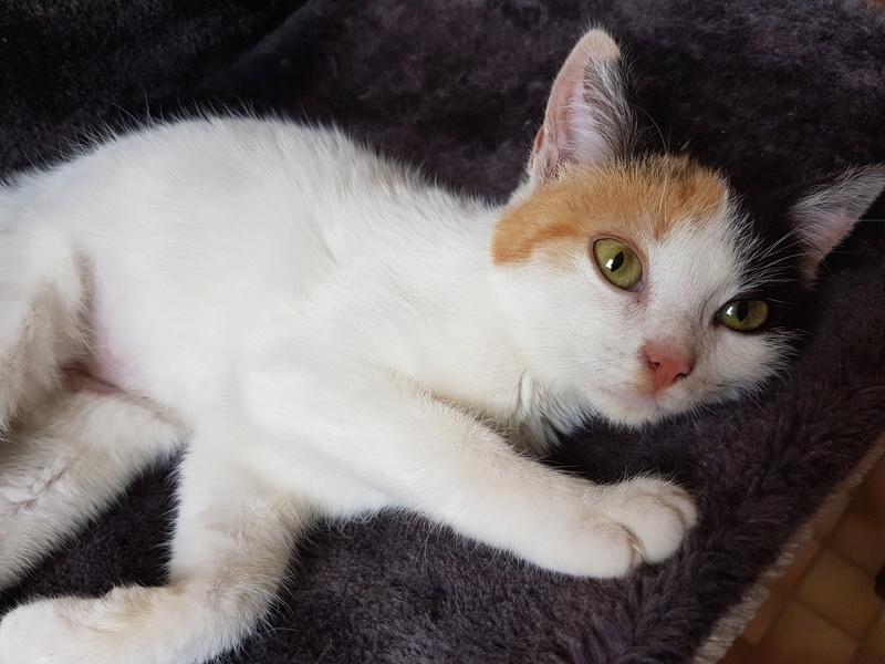 BICKY (ex NASKA) - chaton femelle, née environ novembre 2017 - adoptée par Lorène et Julien (75) 20180322