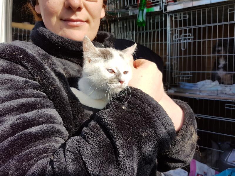 PIXIE - chaton femelle, née environ mi novembre 2017 (Pascani) -  adoptée par Océane (54) 20180334