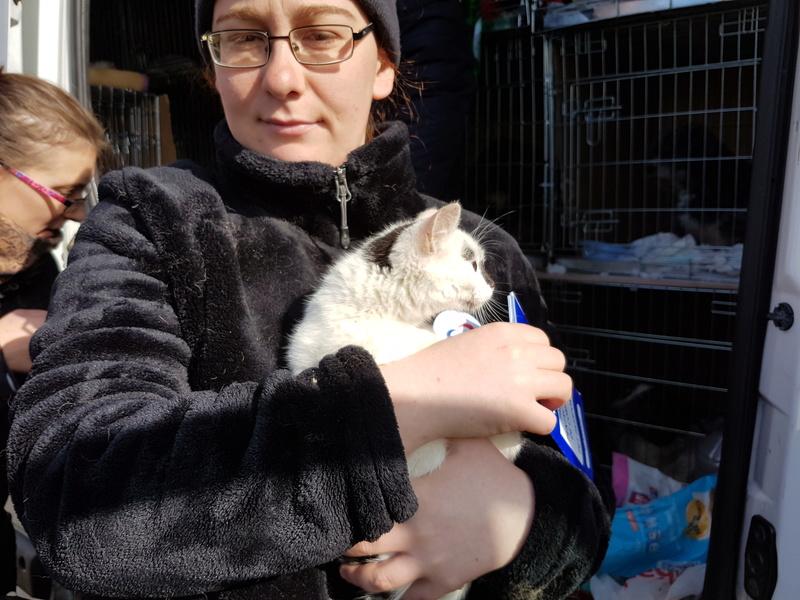 INAYA - chaton femelle, née environ mi novembre 2017 - en FA chez Abysse (92) - ADOPTEE PAR LESLIE et JULIEN (94)  20180336