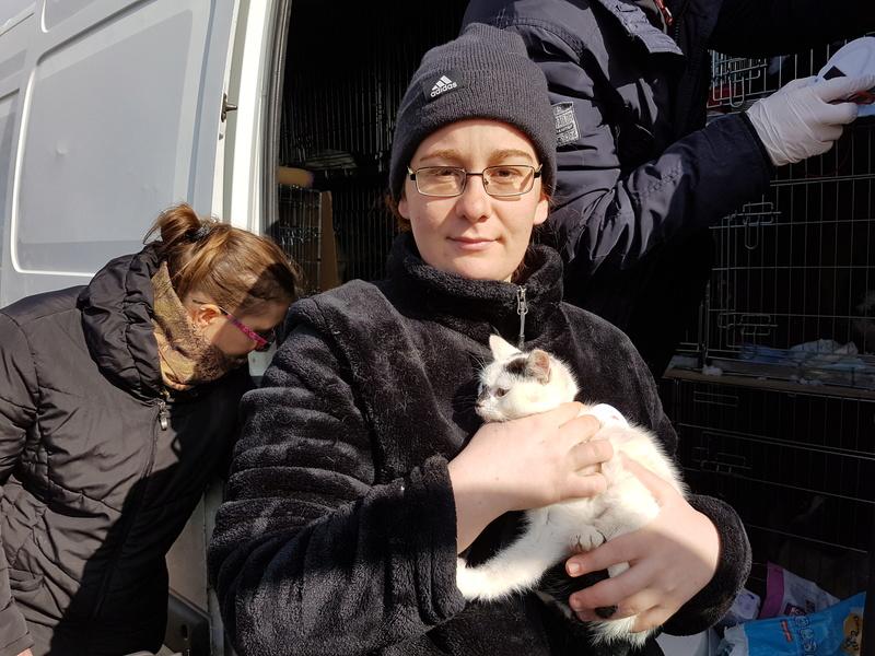 INAYA - chaton femelle, née environ mi novembre 2017 - en FA chez Abysse (92) - ADOPTEE PAR LESLIE et JULIEN (94)  20180337