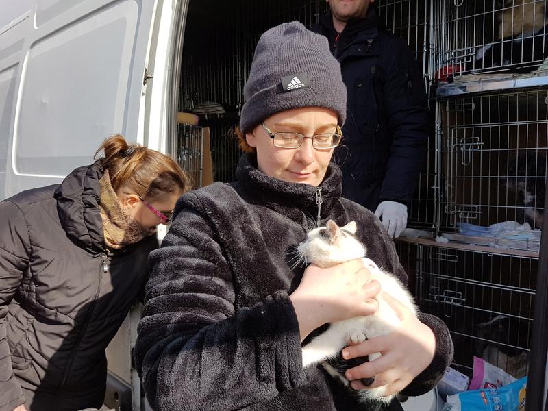 INAYA - chaton femelle, née environ mi novembre 2017 - en FA chez Abysse (92) - ADOPTEE PAR LESLIE et JULIEN (94)  20180338