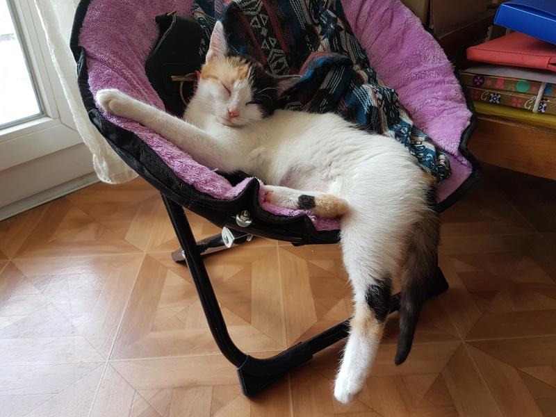 BICKY (ex NASKA) - chaton femelle, née environ novembre 2017 - adoptée par Lorène et Julien (75) 20180343