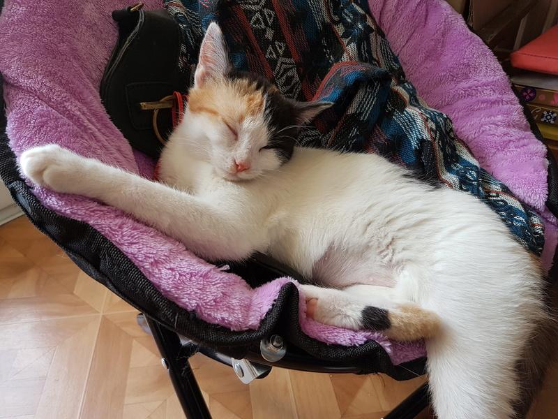 BICKY (ex NASKA) - chaton femelle, née environ novembre 2017 - adoptée par Lorène et Julien (75) 20180345