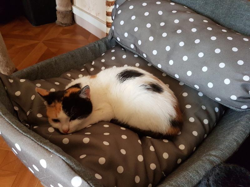 BICKY (ex NASKA) - chaton femelle, née environ novembre 2017 - adoptée par Lorène et Julien (75) 20180346