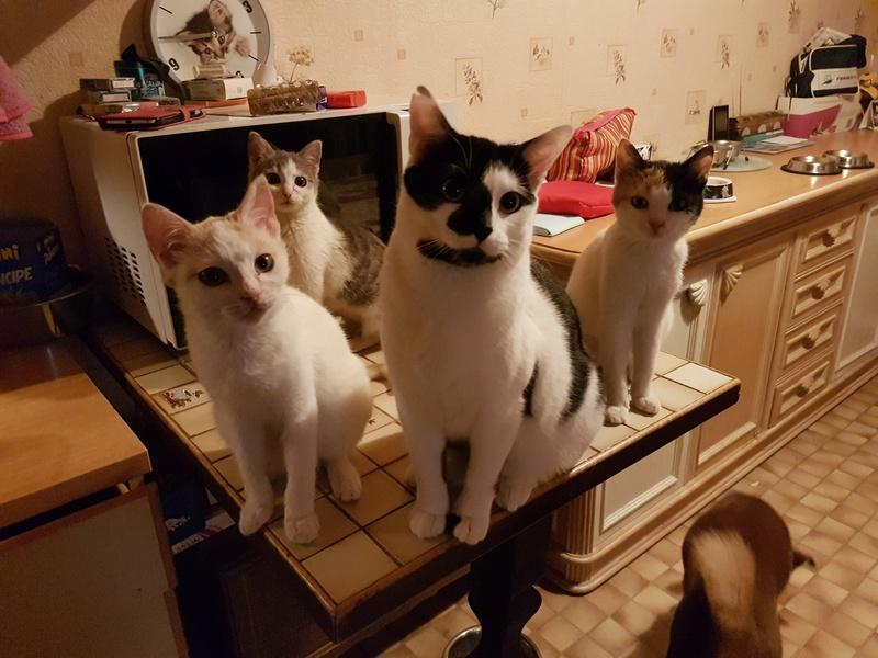 BICKY (ex NASKA) - chaton femelle, née environ novembre 2017 - adoptée par Lorène et Julien (75) 20180347