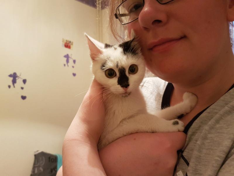 INAYA - chaton femelle, née environ mi novembre 2017 - en FA chez Abysse (92) - ADOPTEE PAR LESLIE et JULIEN (94)  20180349
