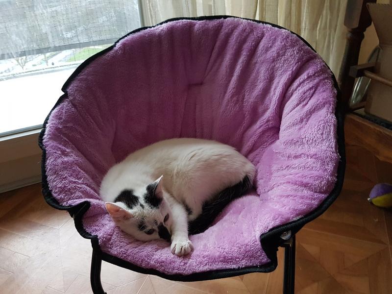 INAYA - chaton femelle, née environ mi novembre 2017 - en FA chez Abysse (92) - ADOPTEE PAR LESLIE et JULIEN (94)  20180416
