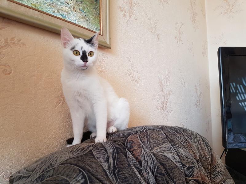 INAYA - chaton femelle, née environ mi novembre 2017 - en FA chez Abysse (92) - ADOPTEE PAR LESLIE et JULIEN (94)  20180449