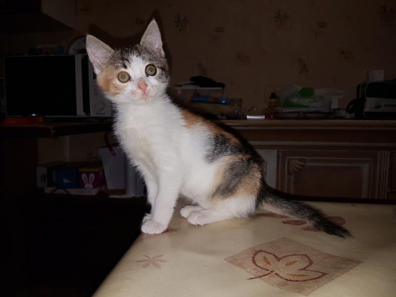 CALICE (ex KAÏNA) - chat femelle, née en fin juillet 2017 - En FA chez Abysse (depart92) - ADOPTEE PAR LAURE (95) 210