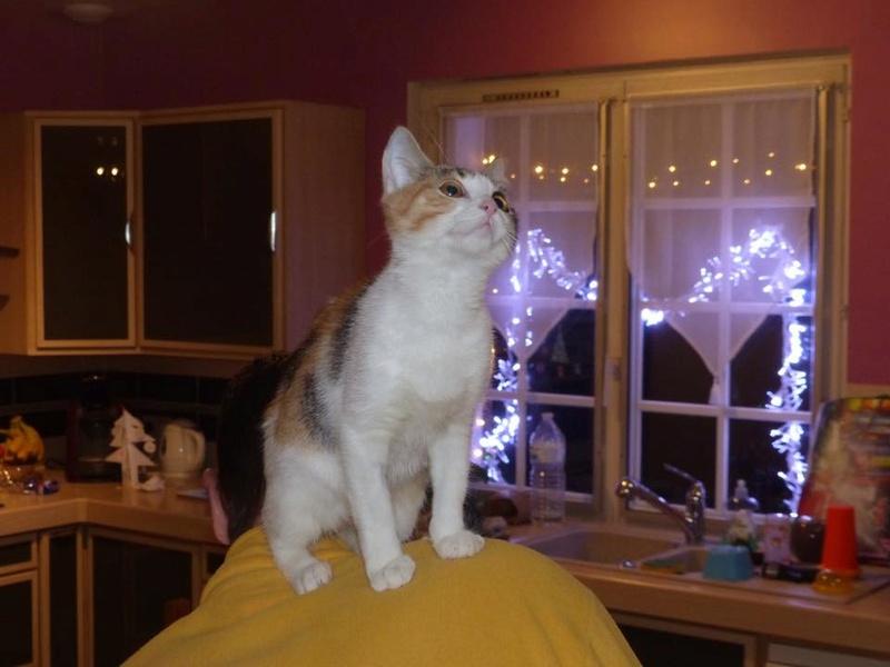 CALICE (ex KAÏNA) - chat femelle, née en fin juillet 2017 - En FA chez Abysse (depart92) - ADOPTEE PAR LAURE (95) - Page 2 26111910