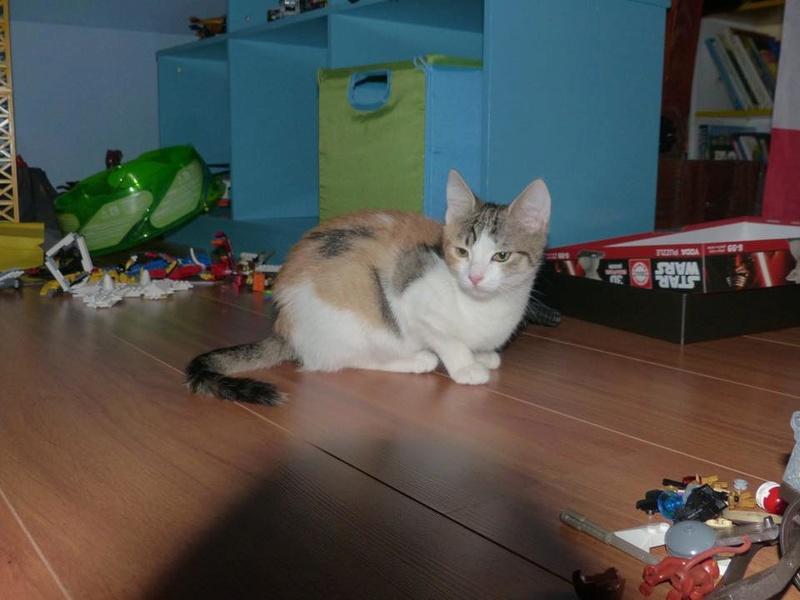 CALICE (ex KAÏNA) - chat femelle, née en fin juillet 2017 - En FA chez Abysse (depart92) - ADOPTEE PAR LAURE (95) - Page 2 26167510