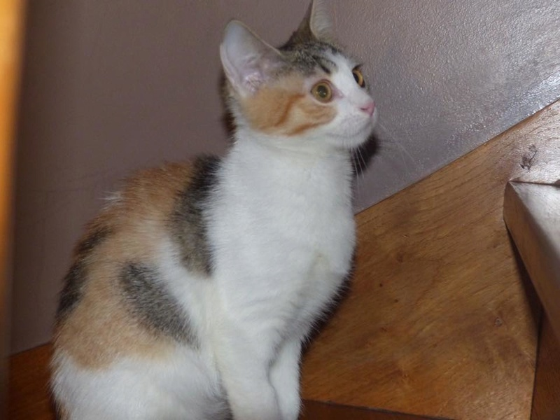 CALICE (ex KAÏNA) - chat femelle, née en fin juillet 2017 - En FA chez Abysse (depart92) - ADOPTEE PAR LAURE (95) - Page 2 26169010