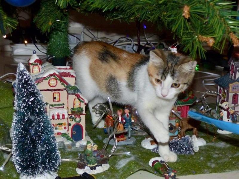 CALICE (ex KAÏNA) - chat femelle, née en fin juillet 2017 - En FA chez Abysse (depart92) - ADOPTEE PAR LAURE (95) - Page 2 26196210