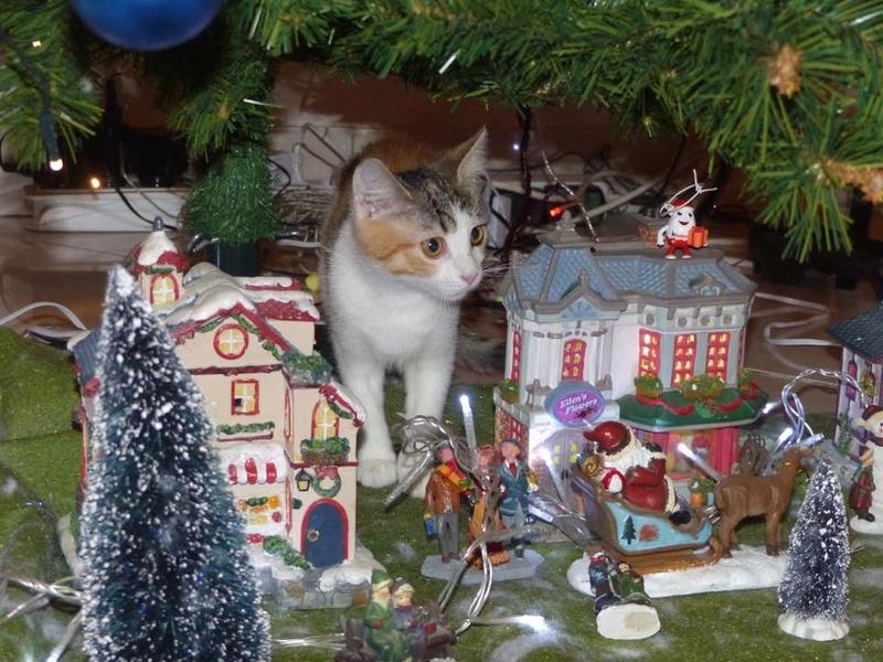 CALICE (ex KAÏNA) - chat femelle, née en fin juillet 2017 - En FA chez Abysse (depart92) - ADOPTEE PAR LAURE (95) - Page 2 26220210