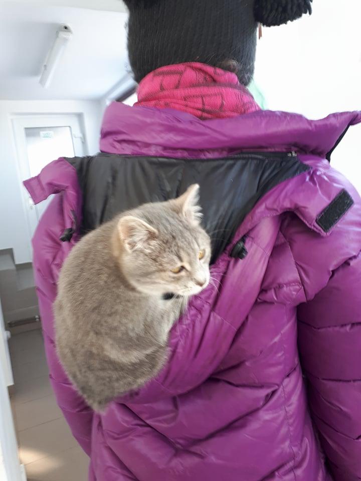 Miss TIGRIS - chat femelle, née en octobre 2017 - en FA chez Abysse (92) - Adoptée par Anne (Belgique) - !! EN FUGUE HELP !! 27496510