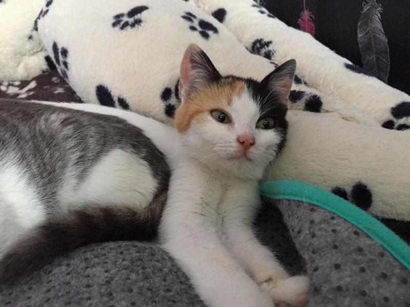 BICKY (ex NASKA) - chaton femelle, née environ novembre 2017 - adoptée par Lorène et Julien (75) 29314210