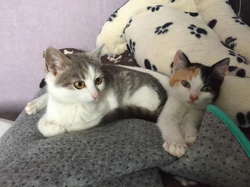 BICKY (ex NASKA) - chaton femelle, née environ novembre 2017 - adoptée par Lorène et Julien (75) 29342212