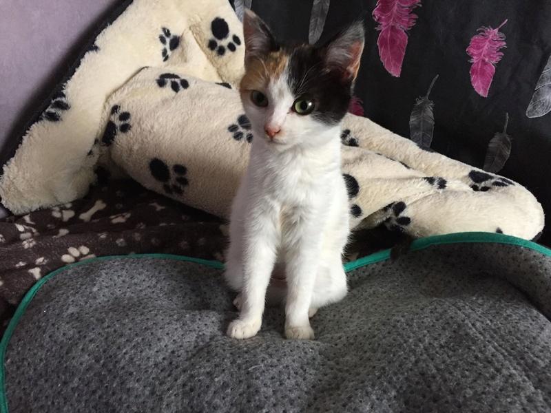 BICKY (ex NASKA) - chaton femelle, née environ novembre 2017 - adoptée par Lorène et Julien (75) 29342710