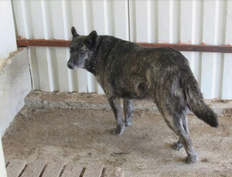 TIGRETTE - femelle croisée de taille moyenne, née en 2009 ( PASCANI) - REMEMBER ME LAND 2tigre10