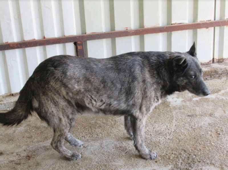 TIGRETTE - femelle croisée de taille moyenne, née en 2009 ( PASCANI) - REMEMBER ME LAND 3tigre10