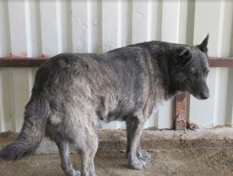 TIGRETTE - femelle croisée de taille moyenne, née en 2009 ( PASCANI) - REMEMBER ME LAND 4tigre10