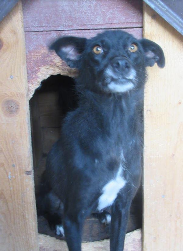 AISHA - femelle croisée de taille petite à moyenne, née environ en mars 2014 - (PASCANI) - REMEMBER ME LAND - Adoptée par Eva (13) Aisha110