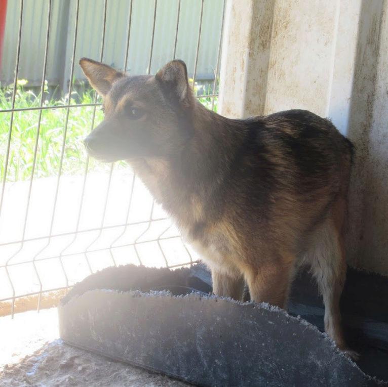 ARCADIA - femelle croisée de taille petite à moyenne adulte, née mai 2017 - REMEMBER ME LAND Arcadi17