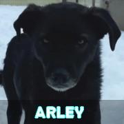 Association Remember Me France : sauver et adopter un chien roumain Arley12