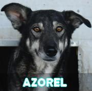 Association Remember Me France : sauver et adopter un chien roumain Azorel49