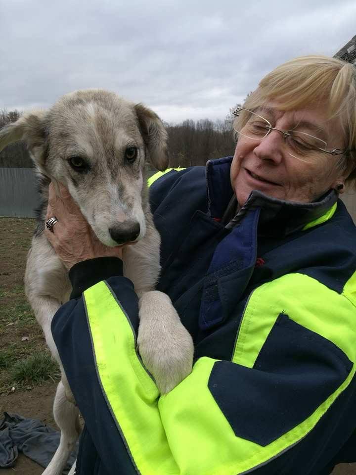 BALTO - mâle croisé Loup Tchécoslovaque ou Nordique ? de taille moyenne adulte, né en avril 2017 (PASCANI) - REMEMBER ME LAND - Adopté par Ludivine (80) Balto13