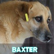 Les séniors en roumanie en un clin d'oeil Baxter14