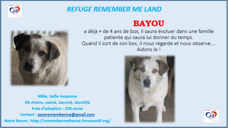 ** BAYOU ** 4 ANS DE BOX - Mâle croisé de taille moyenne, né env 2012 (PASCANI) - REMEMBER ME LAND - Adopté par Dom Pluma (28) Bayou11