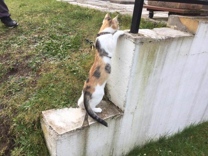 CALICE (ex KAÏNA) - chat femelle, née en fin juillet 2017 - En FA chez Abysse (depart92) - ADOPTEE PAR LAURE (95) - Page 2 Calice16
