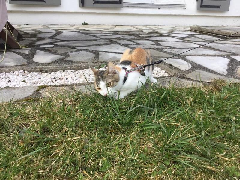 CALICE (ex KAÏNA) - chat femelle, née en fin juillet 2017 - En FA chez Abysse (depart92) - ADOPTEE PAR LAURE (95) - Page 2 Calice18