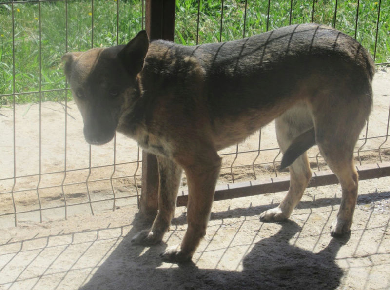 CANNELLE !! plus de 3 ans de box !! femelle, croisée, née en 2013, taille moyenne (Cristesti) - REMEMBER ME LAND - Page 2 Cannel15