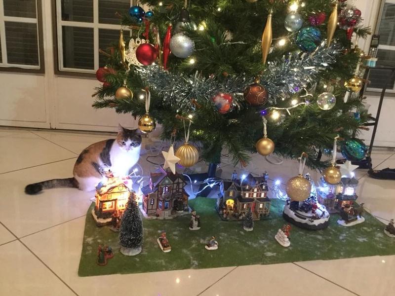 CALICE (ex KAÏNA) - chat femelle, née en fin juillet 2017 - En FA chez Abysse (depart92) - ADOPTEE PAR LAURE (95) - Page 2 Clice110
