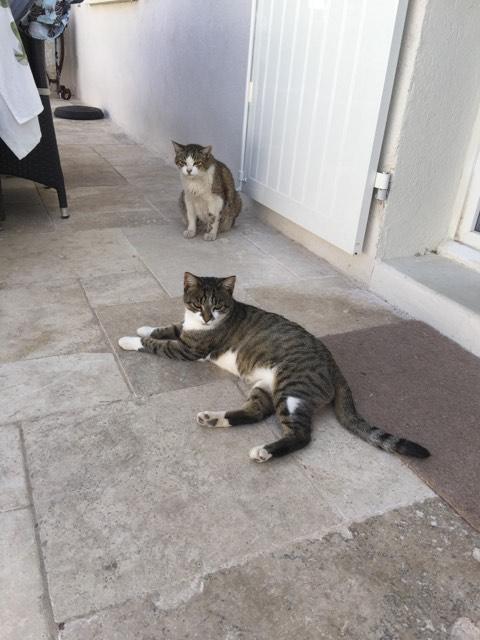 CLOCHETTE - chat femelle née septembre 2015, très gentille et calme - en FA chez Christine (83) Cloche10