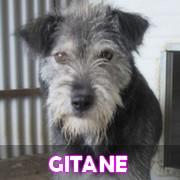 Les adultes de taille moyenne en Roumanie en un clin d'oeil Gitane10